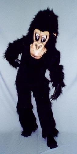 Chimp - Coco-0
